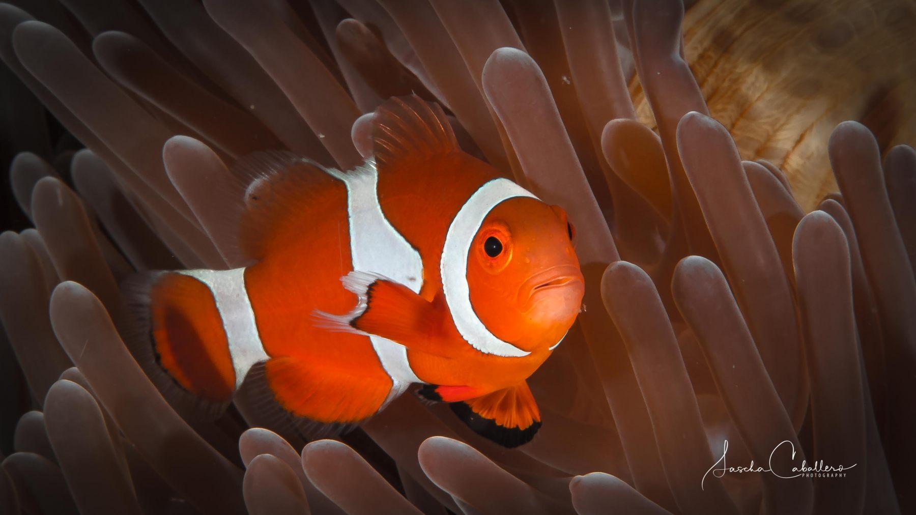 Anda Underwater