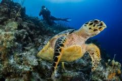 Tauchen Curacao