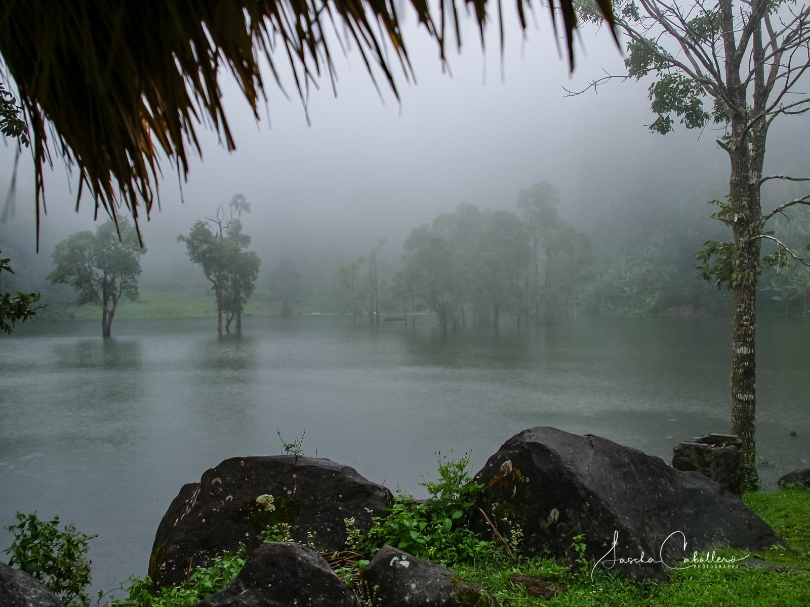 Negros Regenwald