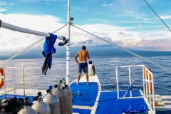 Tauchen um Apo Island eine Tagestour