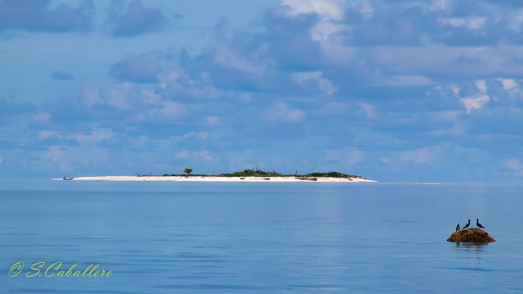 Tubbtaha-Reef Bird Island