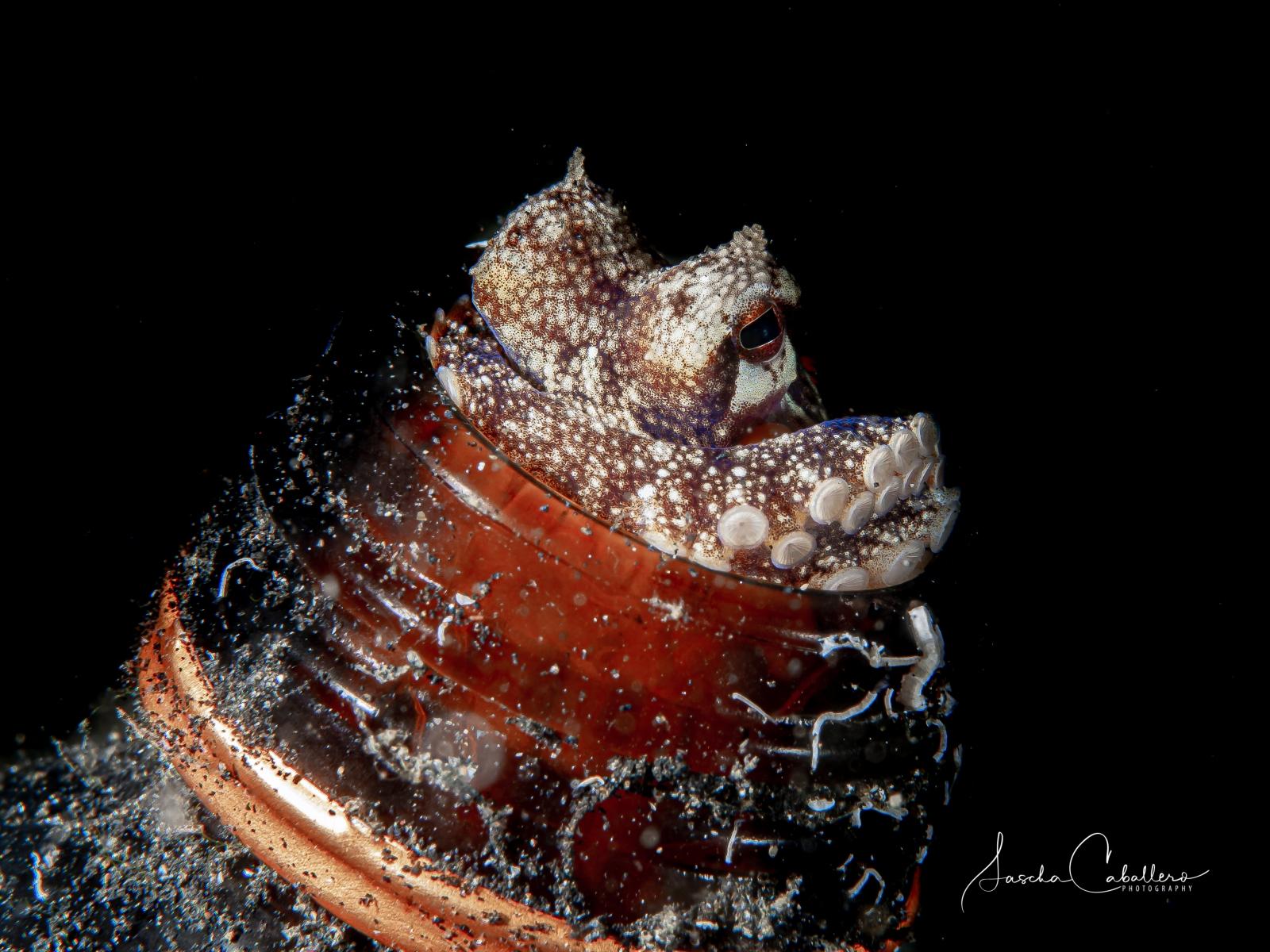 Oktopus in Bierflasche