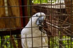 Christians Papageien Zucht