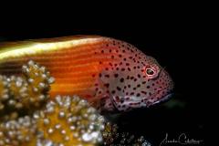Sipalay Unterwasser